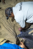 tartaruga-marinha-em-Trinidad-e-Tobago-13-