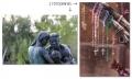 diferença-entre-fotografia-e-imagem-1-