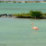 Pink salty flamingo