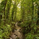 Emerald Rainy Forrest