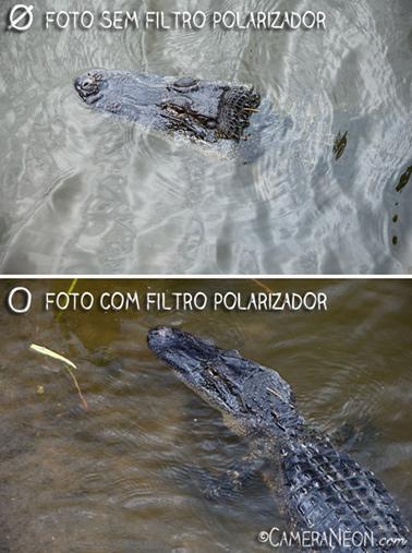 Filtro polarizador; câmera; foto; fotografia; como tirar fotos; acessórios para fotografia; Crocodilo; Brazos Bend State Park; Crocodile