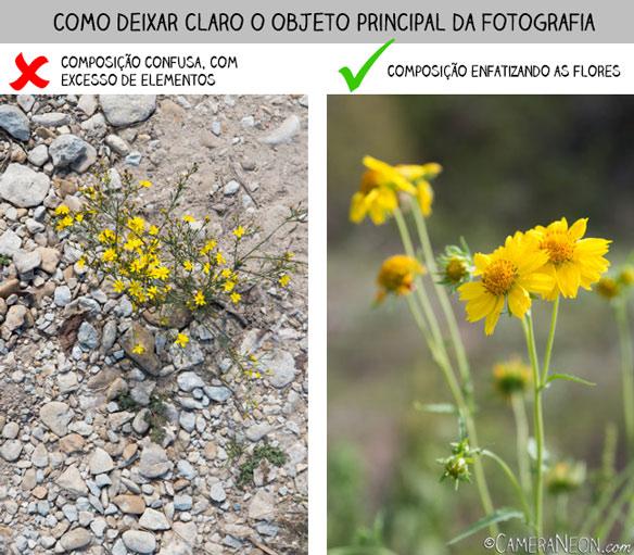 composição, composição na fotografia, flor