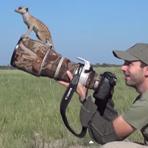 fotografando-suricatos-1x1