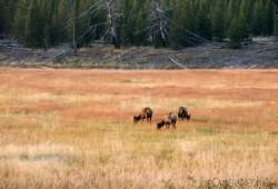 dicas-fotografia-Parque-Nacional-de-Yellowstone-09A-