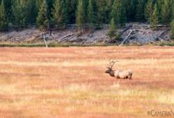 dicas-fotografia-Parque-Nacional-de-Yellowstone-09B-