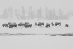 dicas-fotografia-Parque-Nacional-de-Yellowstone-0B-