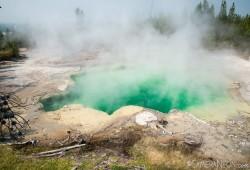 Emerald Spring Vapor