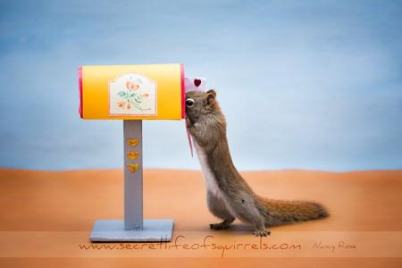 The-Secret-Life-of-Squirrels-(1-2-)