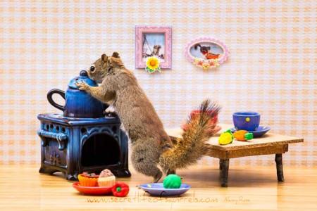 The-Secret-Life-of-Squirrels-(3-)