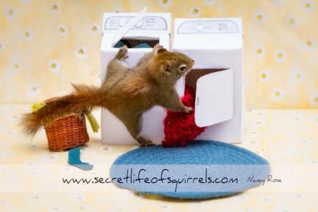 The-Secret-Life-of-Squirrels-(5-)