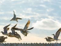 Sea birds flying freely