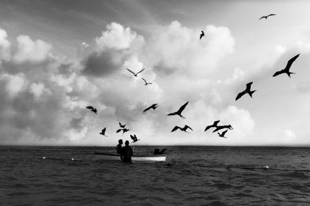 An Island, por Mariana Moraes (1)